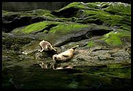 Tuleni na ostrove Skye