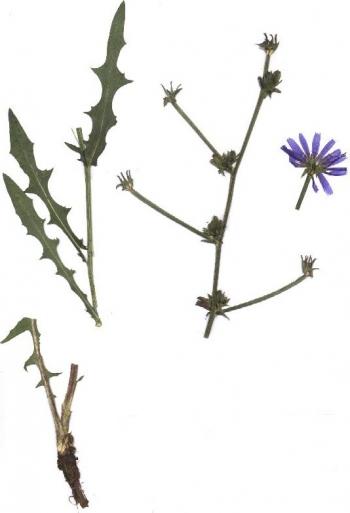 Fotka rostliny